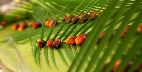 Crude-Palm-Oil-CPO-Fresh-Fruit-Bunches-FFB-Indonesia-Investments